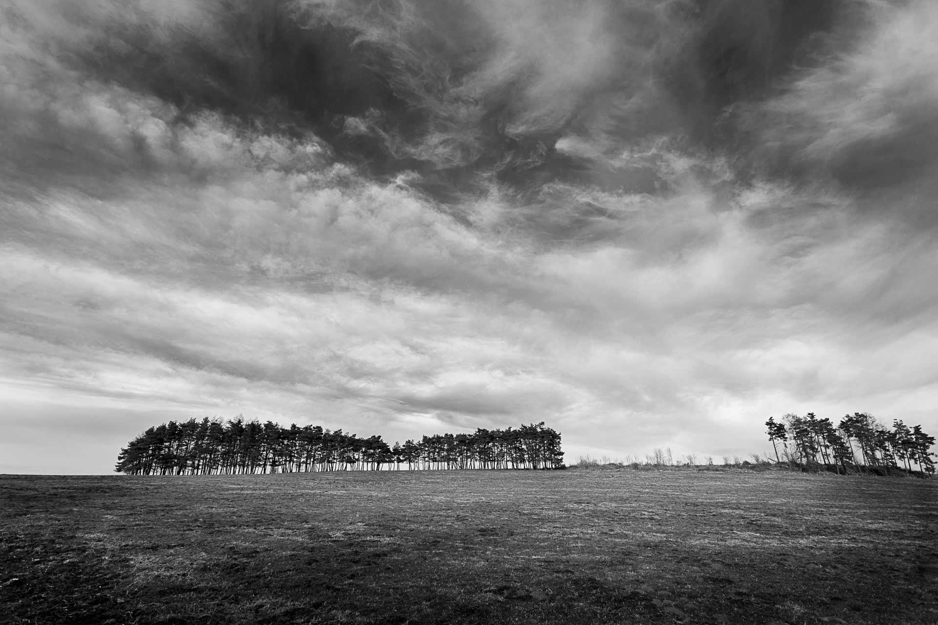 Bosquet dans la prairie Jussac