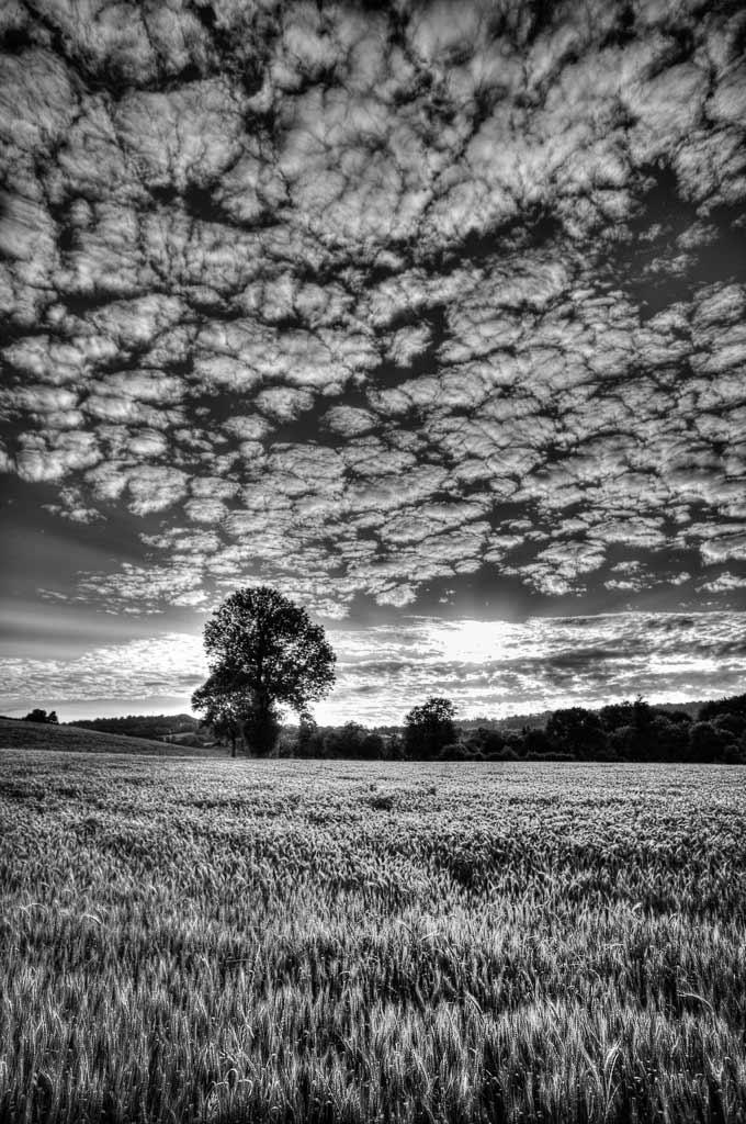 Ciel moutonneux au dessus du champs de blé