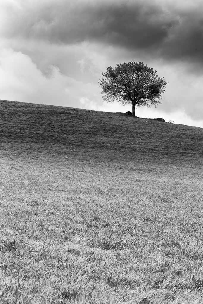 Un arbre seul sur la colline