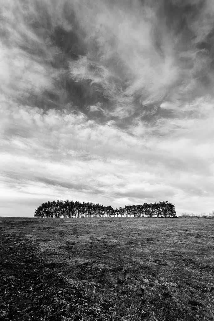 Un bosquet sur la prairie. Comme une île au milieu de la mer. Panneaux solaire Jussac