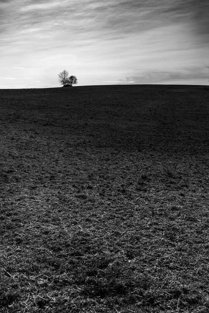 Un bouquet d'arbres seul sur la prairie - Cantal