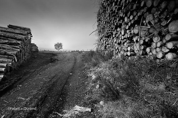 Petit arbre frele au milieu de piles de bois coupé