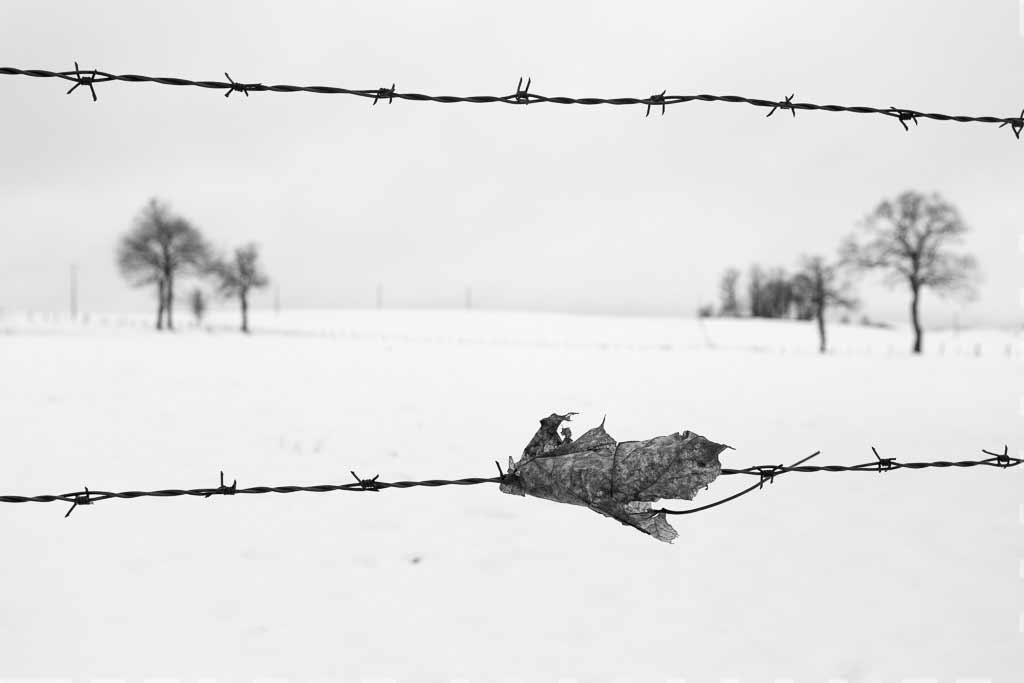 Une feuille épinglé sur un fil barbelé en hiver