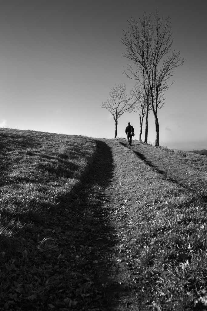 Randonneuse seul sur un chemin bordé d'arbre