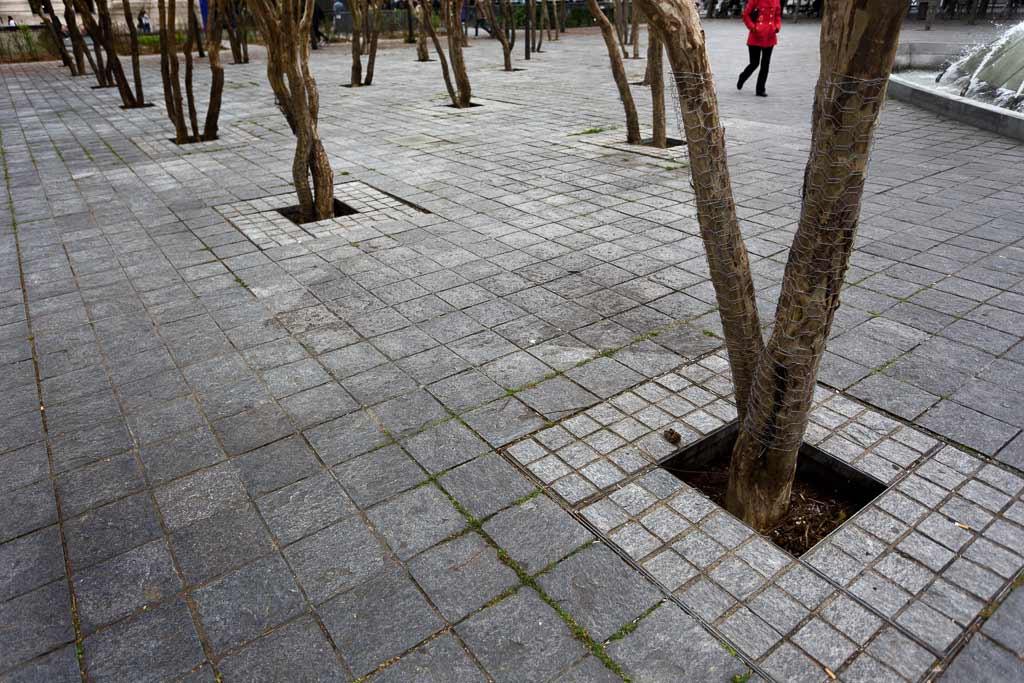 Alignement d'arbre pris dans une place de Tours