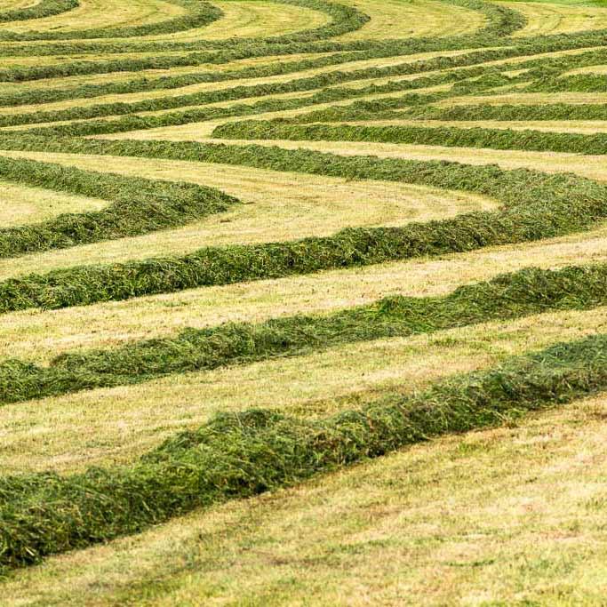 courbe de foin dans un champs fraichement coupé