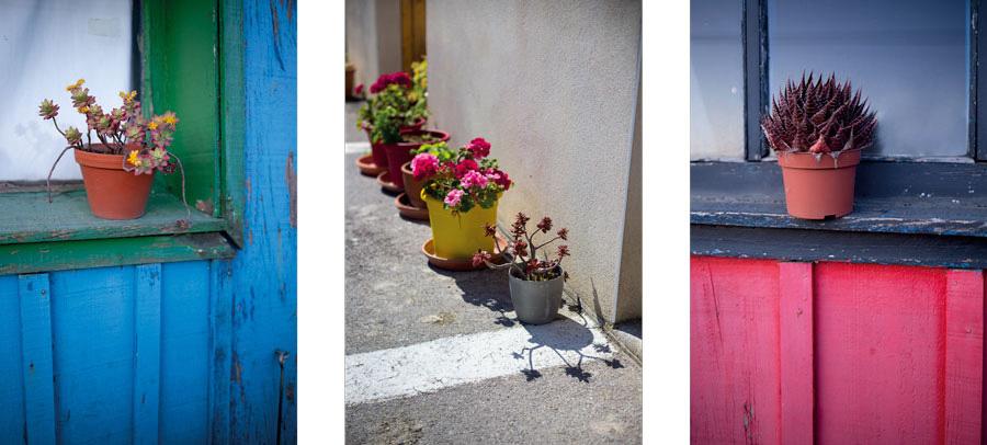 triptyque photos de fleurs en pot