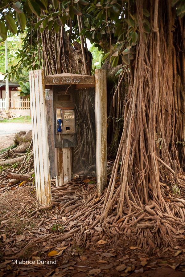 Cabine téléphonique envahis par les racines d'un arbre Martinique