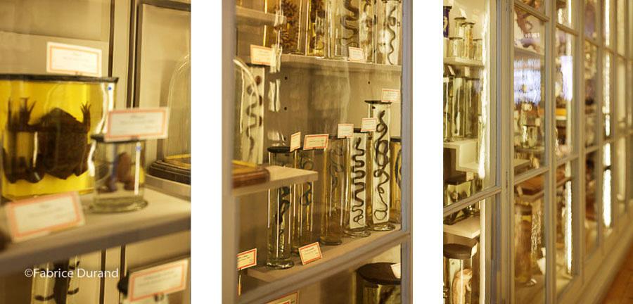 Collection serpents et batraciens Muséum d'Histoire naturelle de La Rochelle
