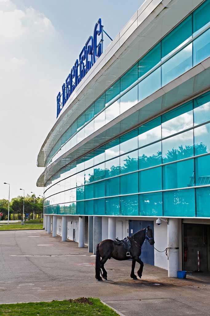 Un cheval attaché devant un supermarché moderne.