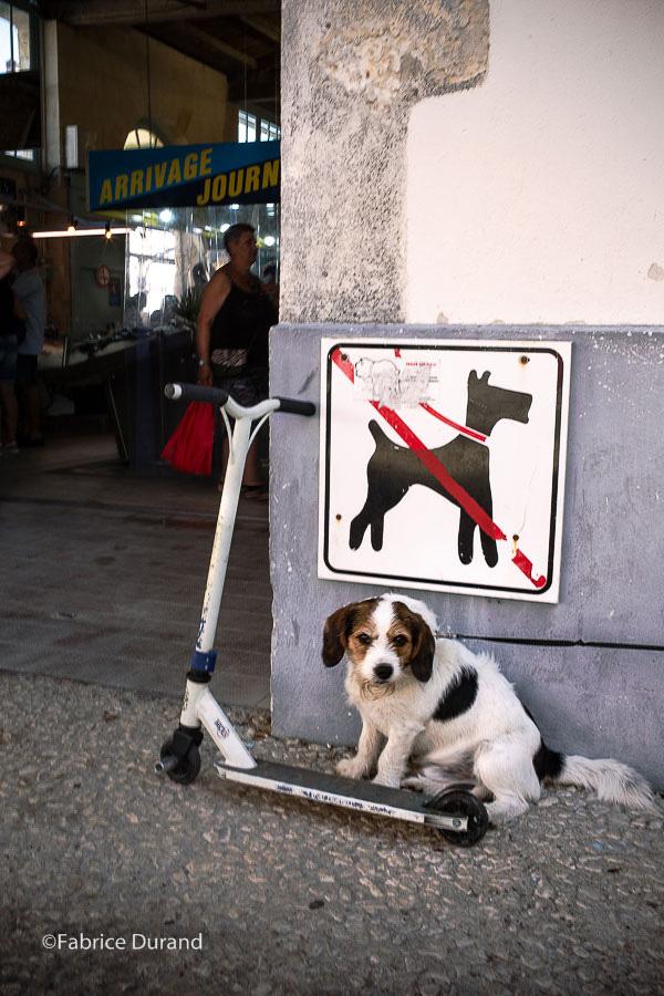Un chien au parking