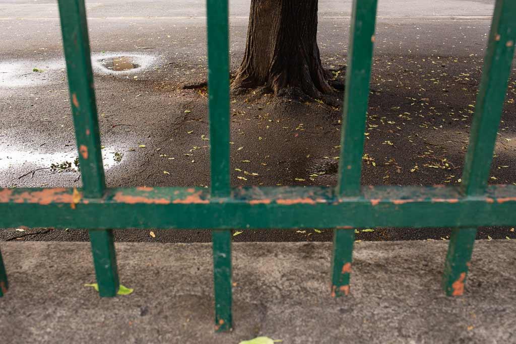 Racine d'un arbre pris dans le bitume derriere les grilles de la cours de l'école