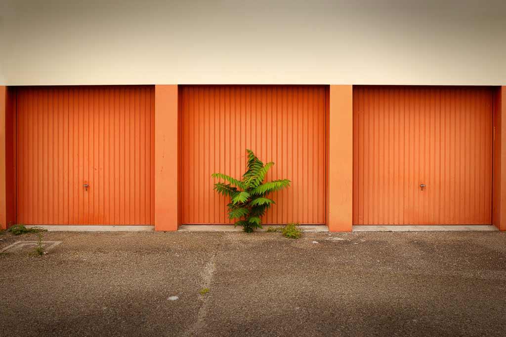 Plante sauvage a poussée devant la porte d'un garage