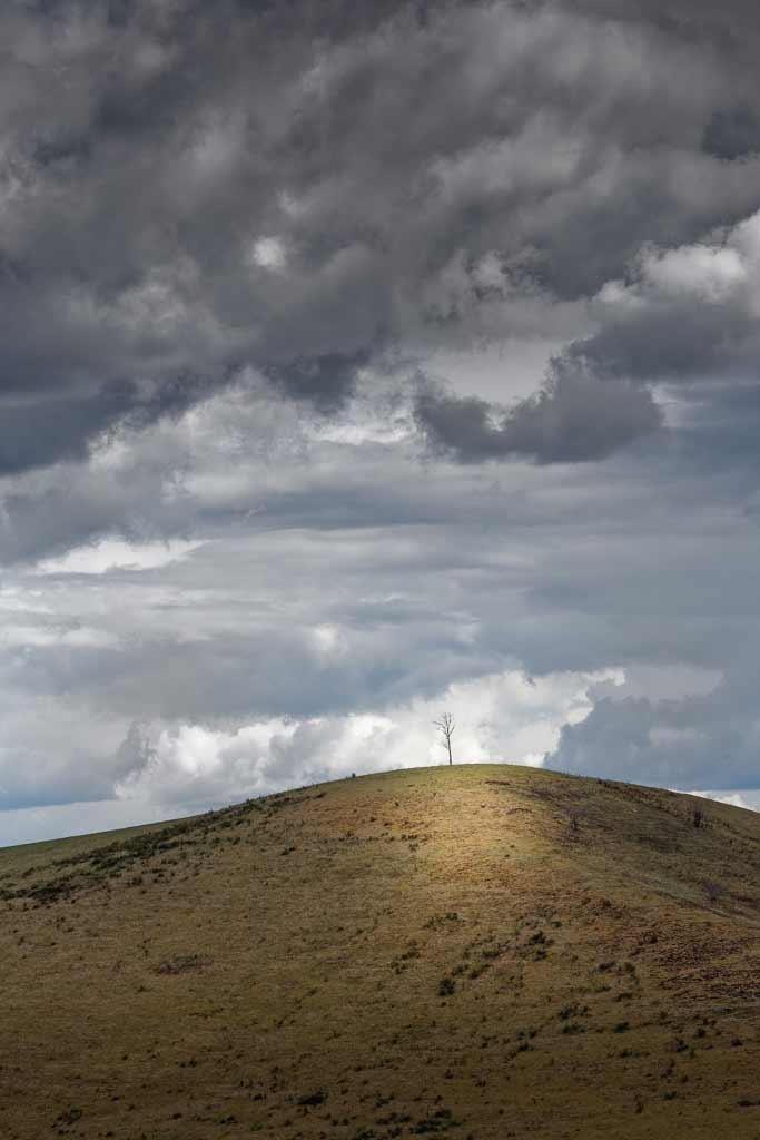 arbrissau seul sur la coline Cantal