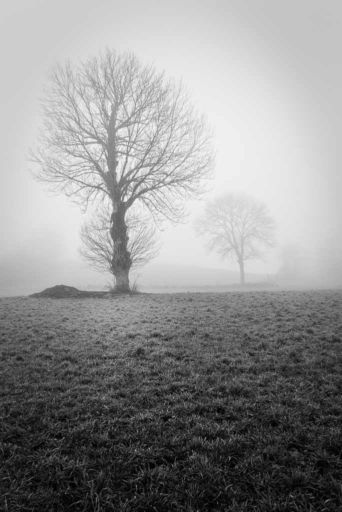 arbres dans la Brume Matinale Cantal