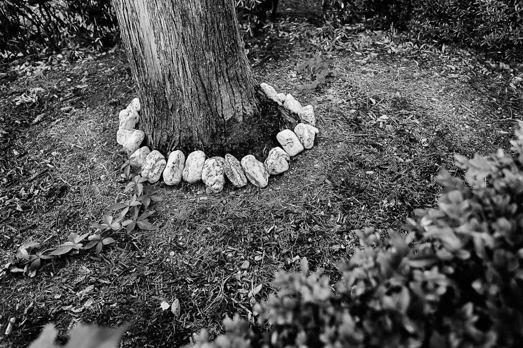 Galets blanc disposés autour d'un arbre