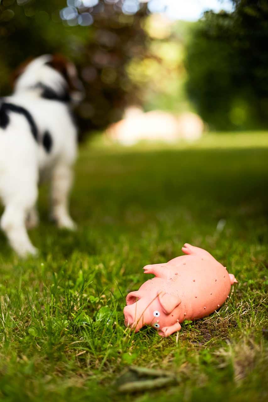 La mort du cochon