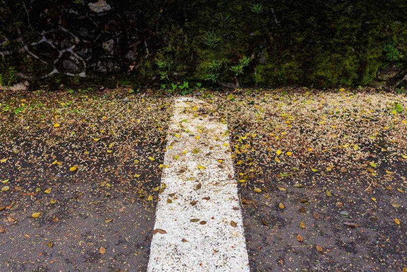 Pétales de fleurs après la pluie