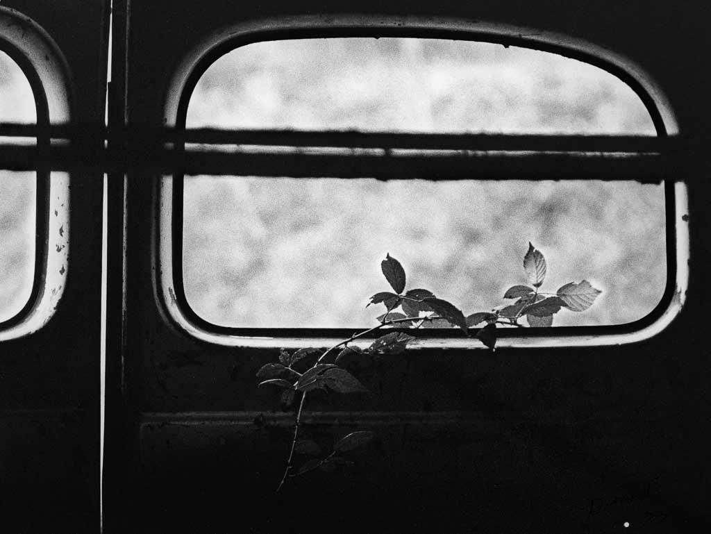 Une ronce s'échappe par la fenêtre