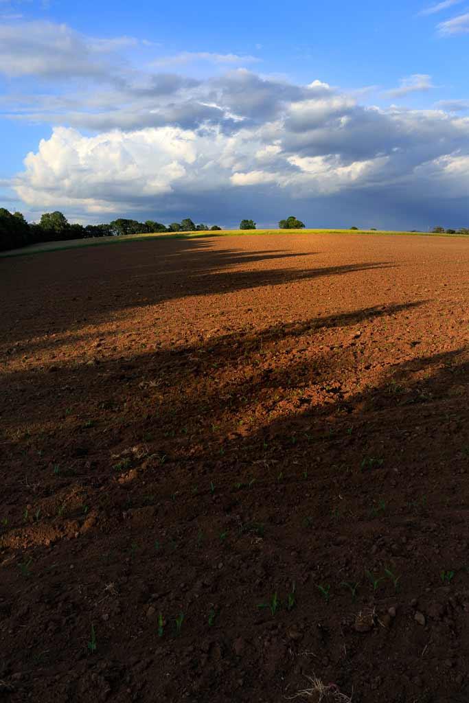 Lumière du soir sur les champs