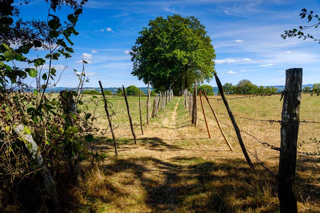 Paysage arbre Crandelle Cantal