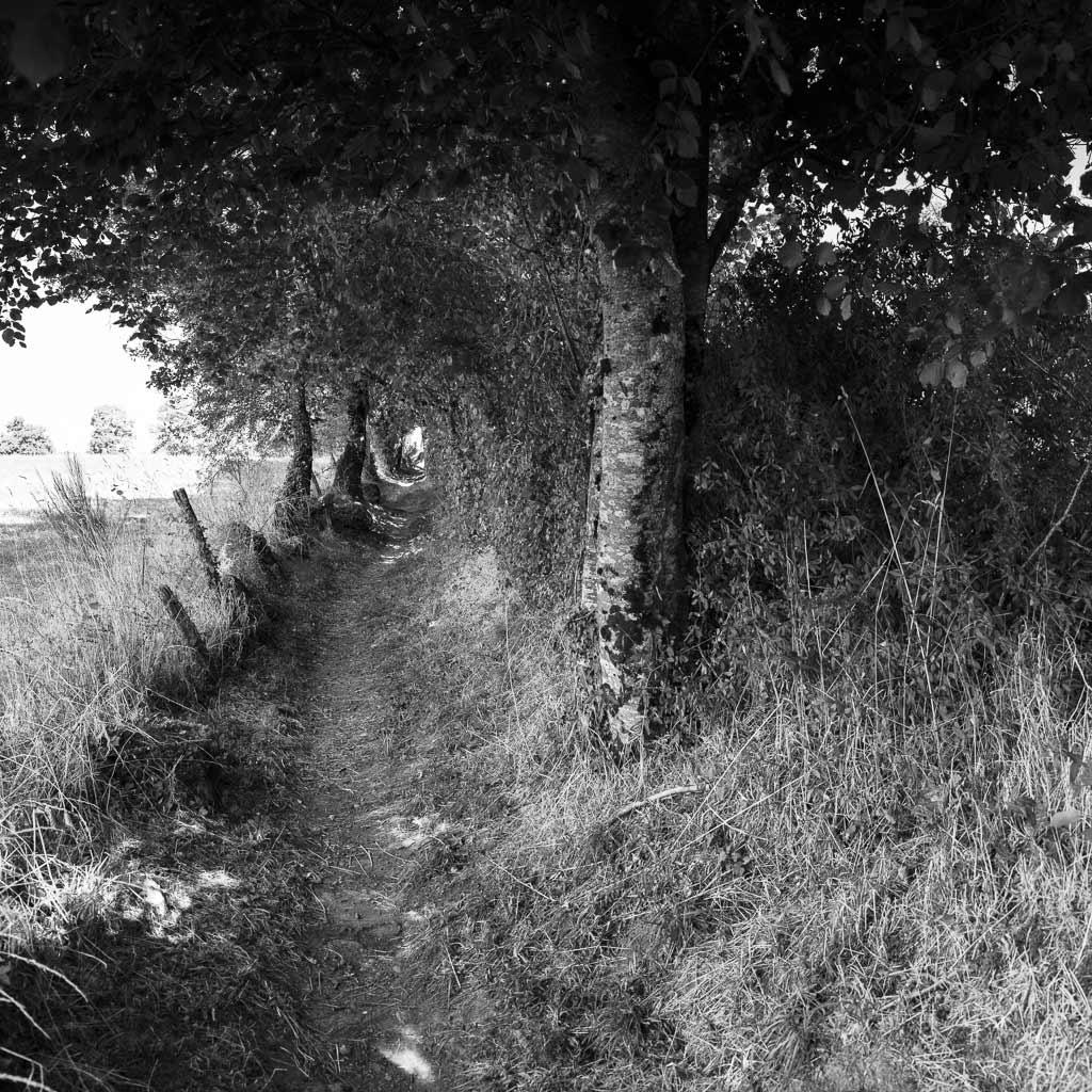 Petit chemin qui sent la noisette Crandelle Cantal