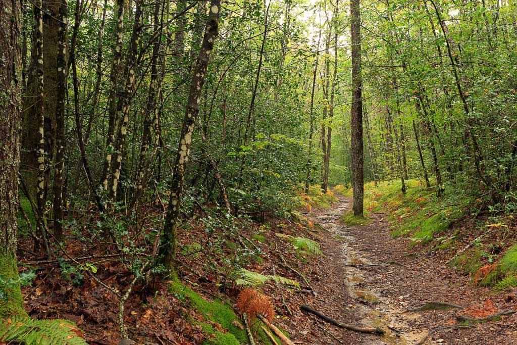 Forêt de Branviel sous la pluie, c'est le début de l'automne.