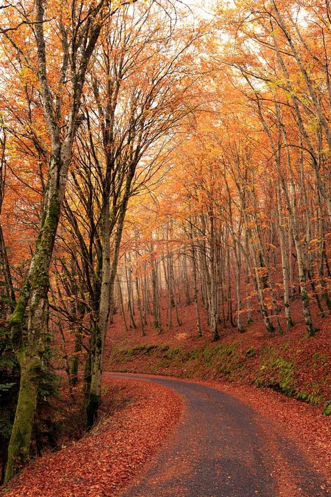 Route-d'automne