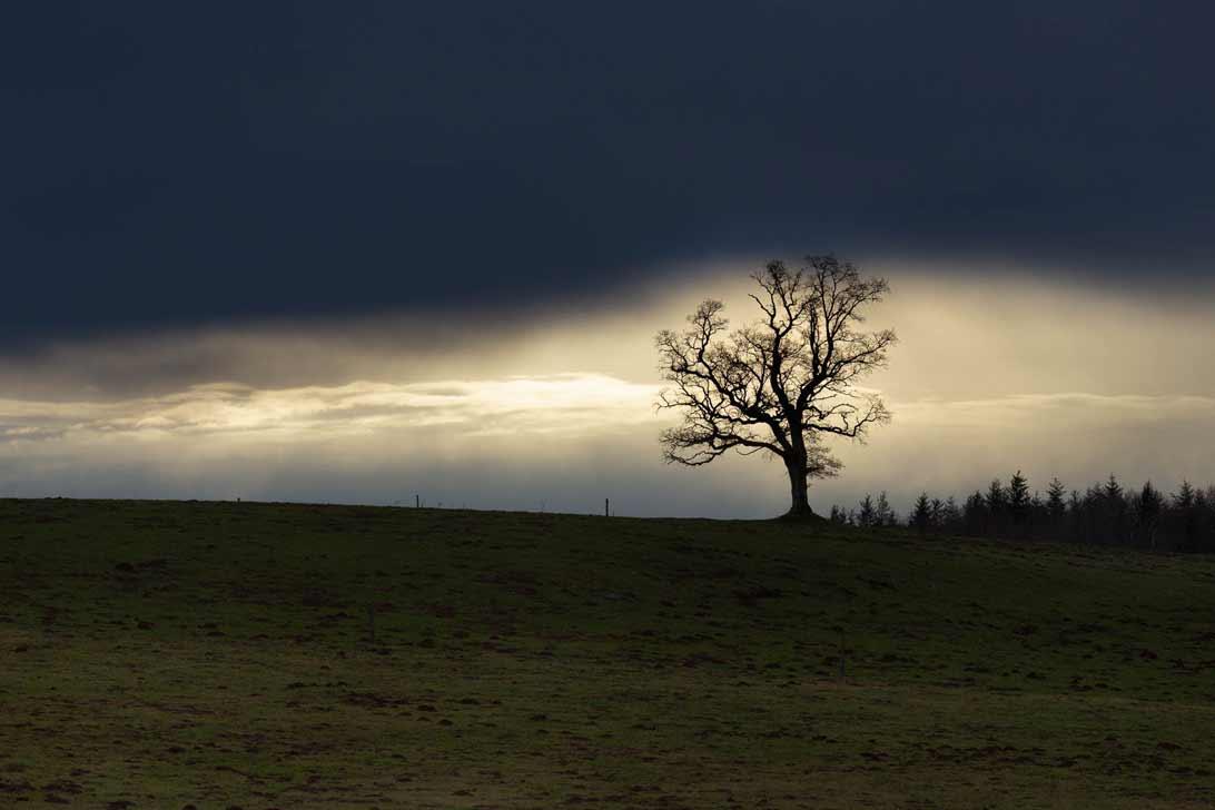 L'arbre-silhouette