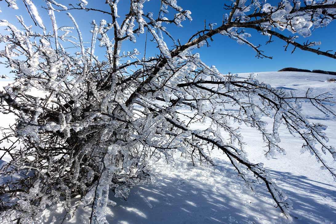 Un arbre couvert de glace