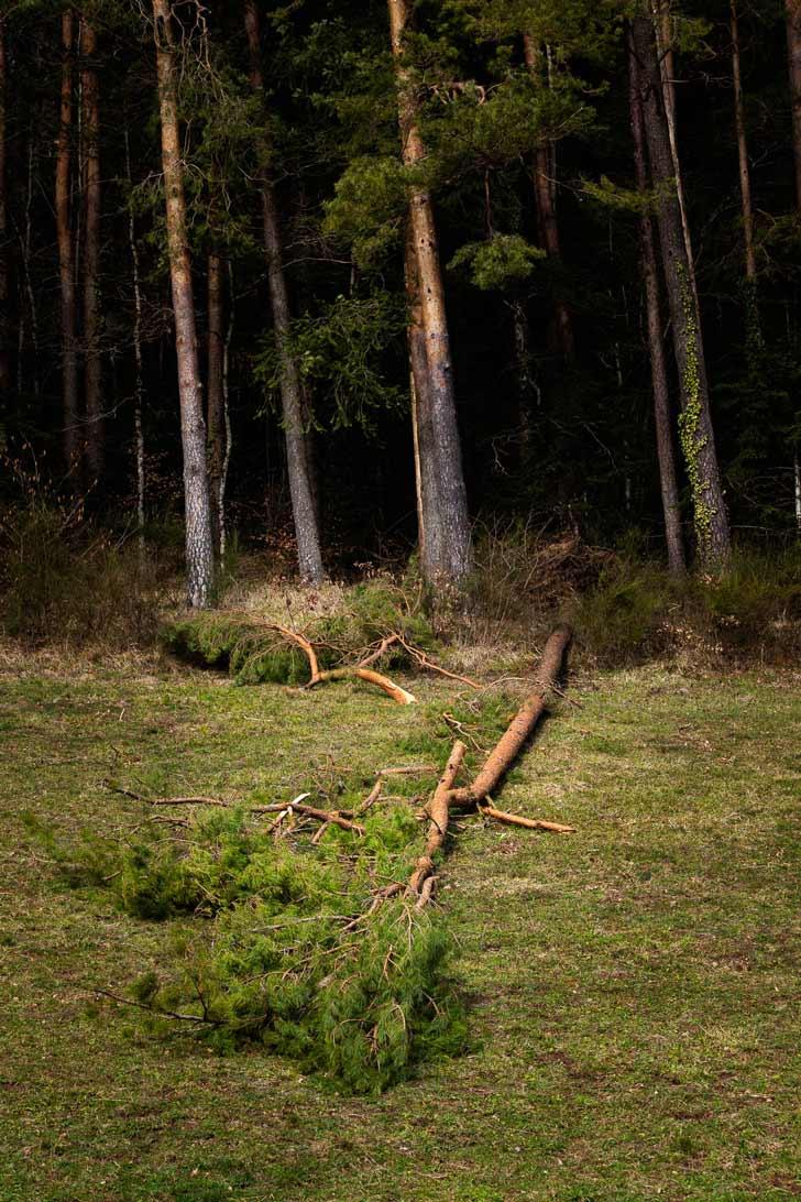 Un arbre renversé par la tempête