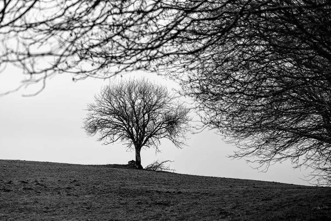 un arbre sur la crête