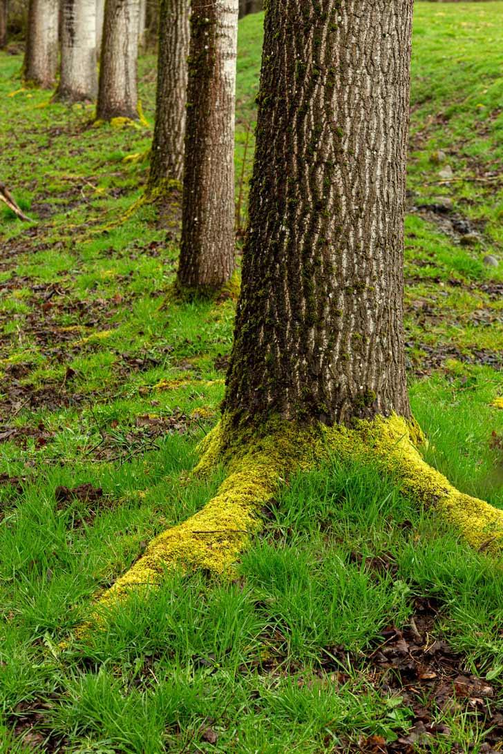 cherche tes racines
