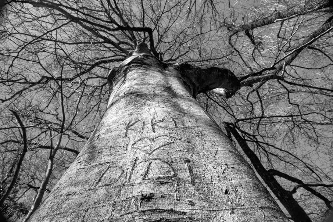 Coeur gravé sur un arbre