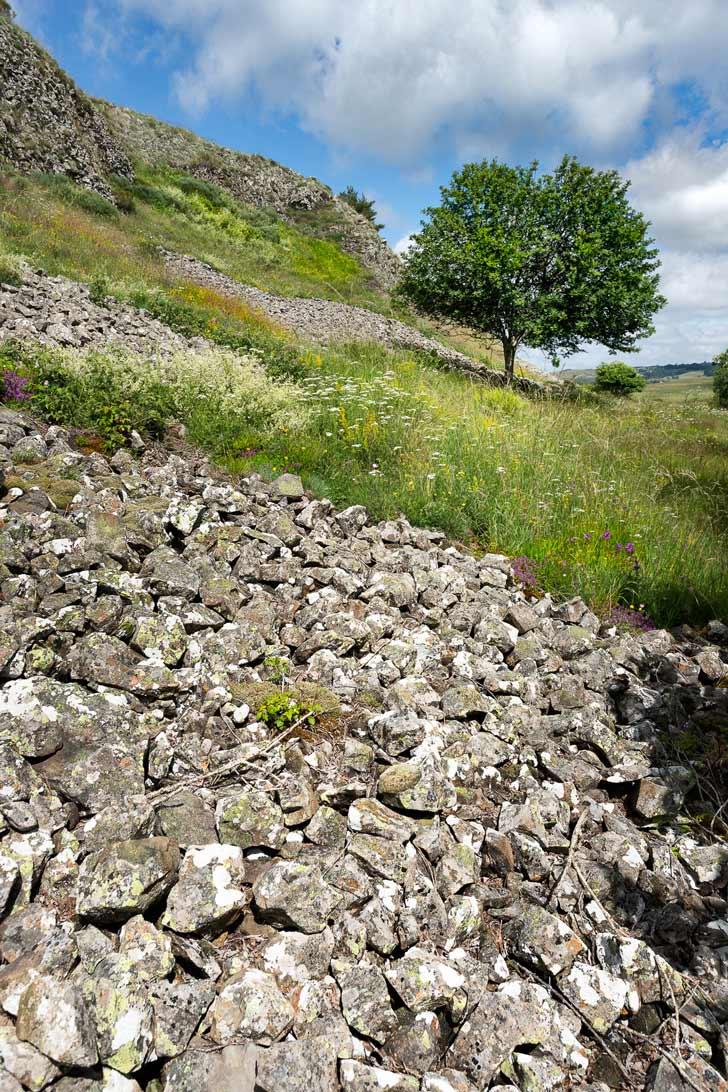 champs de roches