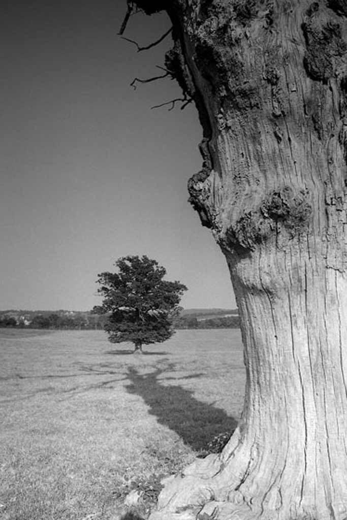 Projection de l'ombre d'un arbre mort sur un arbre majestueux Cantal
